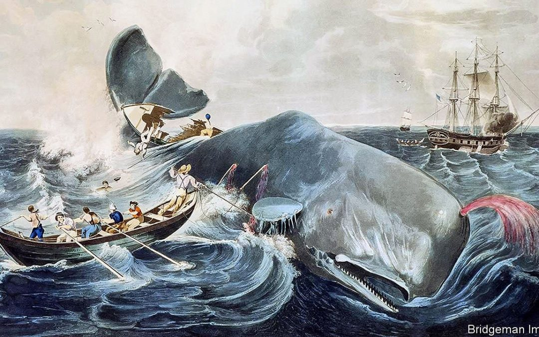 Overheard in the Caravanserai…Melville's Moby Dick and the Human Condition