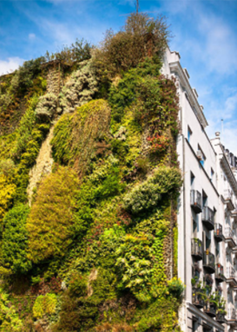 Living wall 5