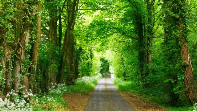 Surprising Health Benefits of Getting Fresh Air