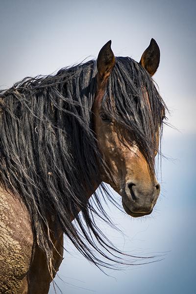 Mustang- Stallion_DSC3082081520