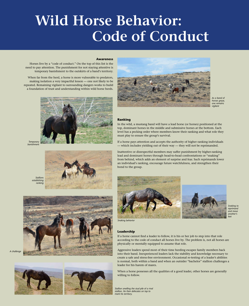 Code-of-Conduct-1000x1227