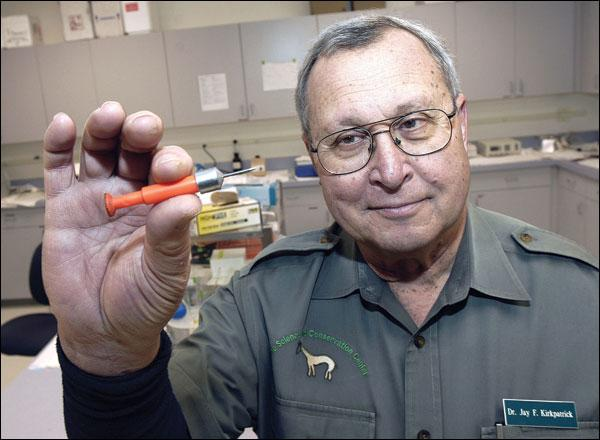 David Grubbs Billings Gazette - Jay Kirkpatrick of ZooMontana holds a dart that is used to administer contraceptives to deer.