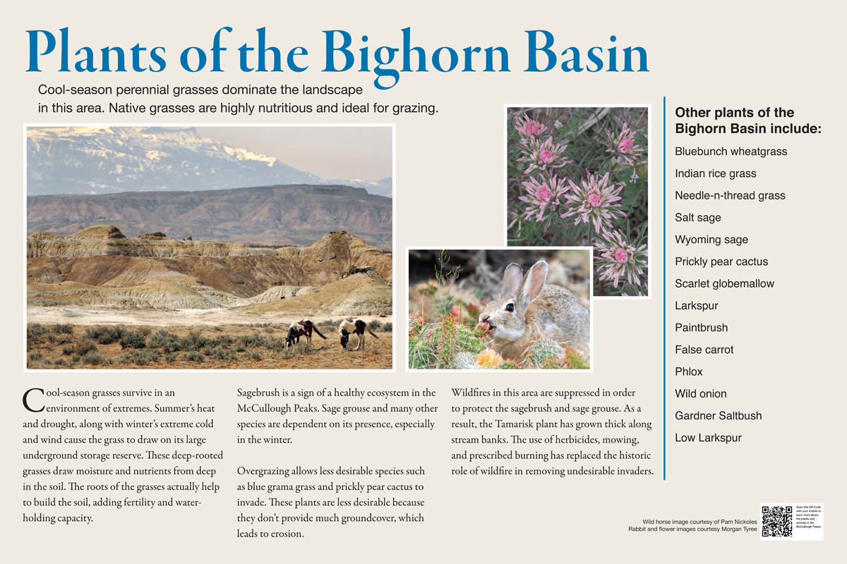 Plants-of-the-Bighorn-1200x800