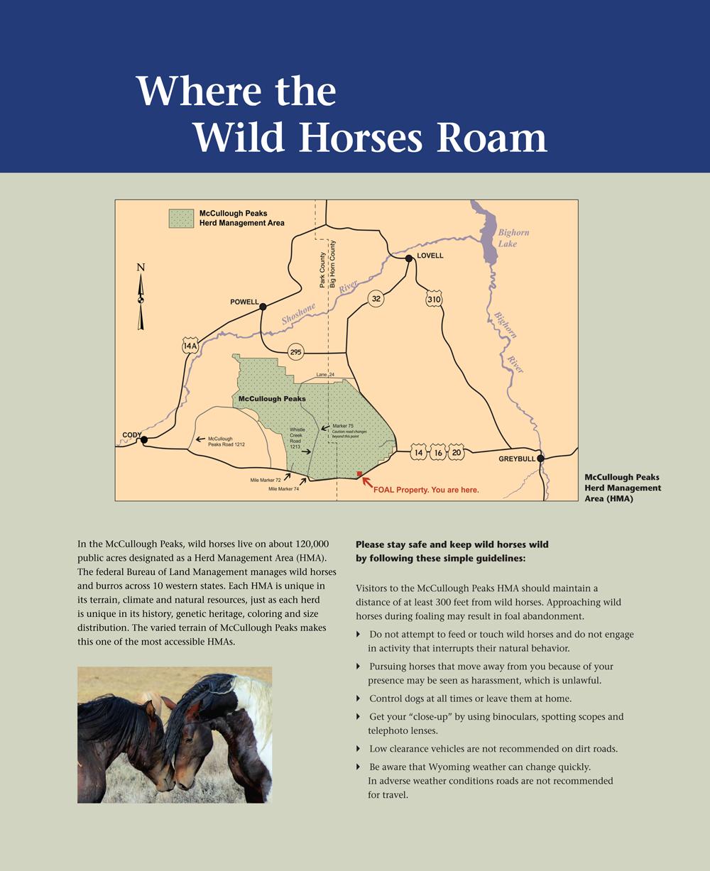 Where-the-Wild-Horses-Roam-1000x1227