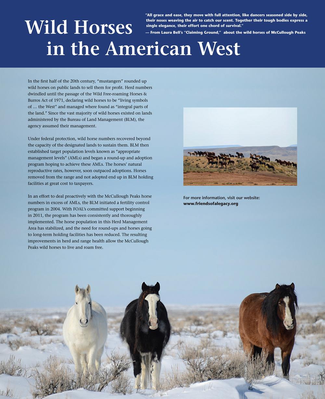 Wild-Horses-1000x1227