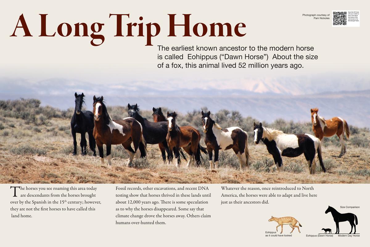 horse-history-1200x800