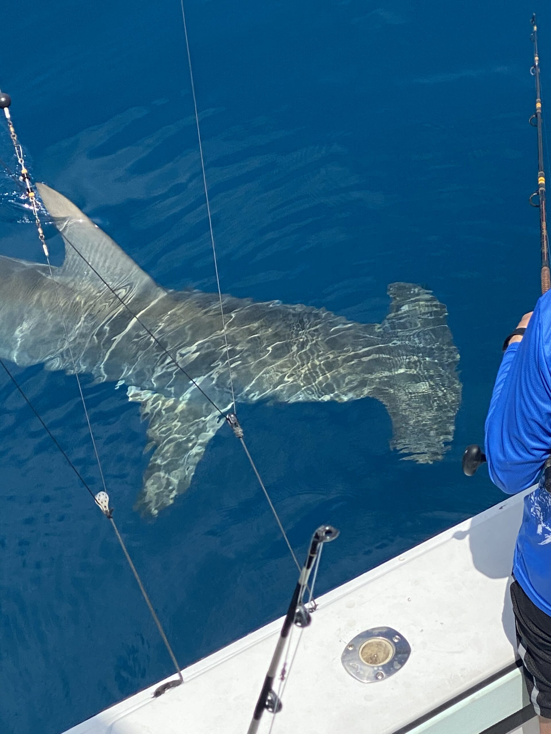 Shark Week!