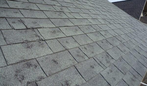 hail-damage-to-asphalt-shingles-1024x768