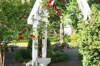 Cambridge house garden