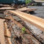 Bucks-Hard-Wood-Milling-Doylestown-PA