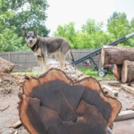 Wood-Slabs-Souderton-PA