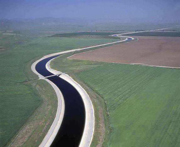 California Delta Smelt Near Extinction