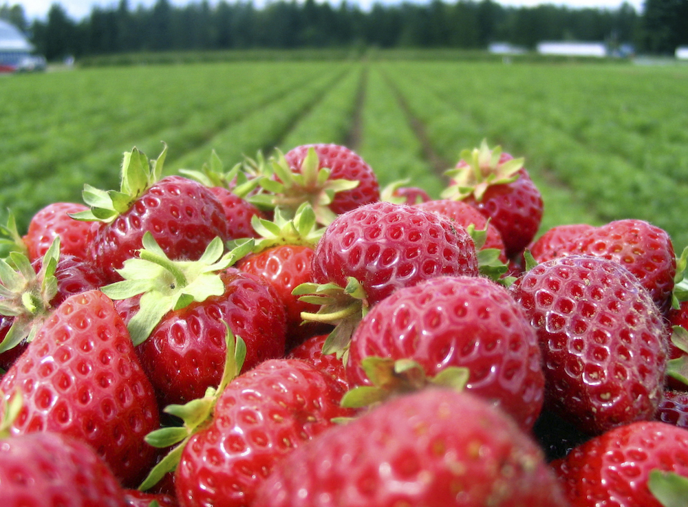 The Little Berry that Could: How Strawberries Contribute to the Vitality of Southern California's Urban Economy