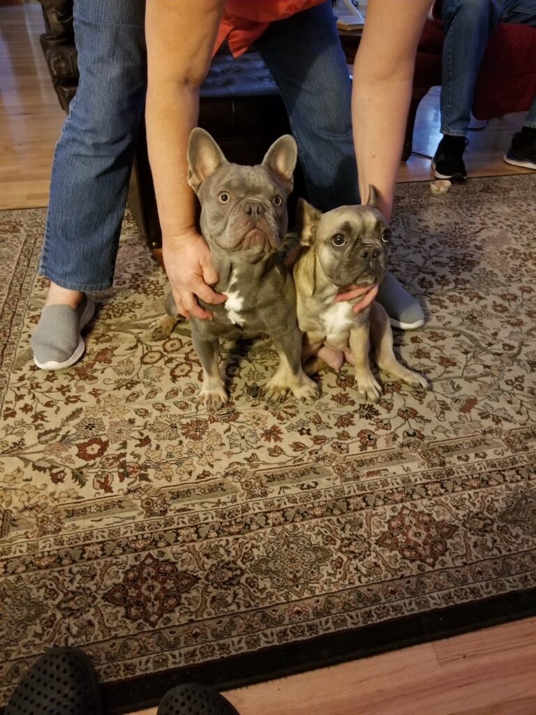 Our French Bulldog parents