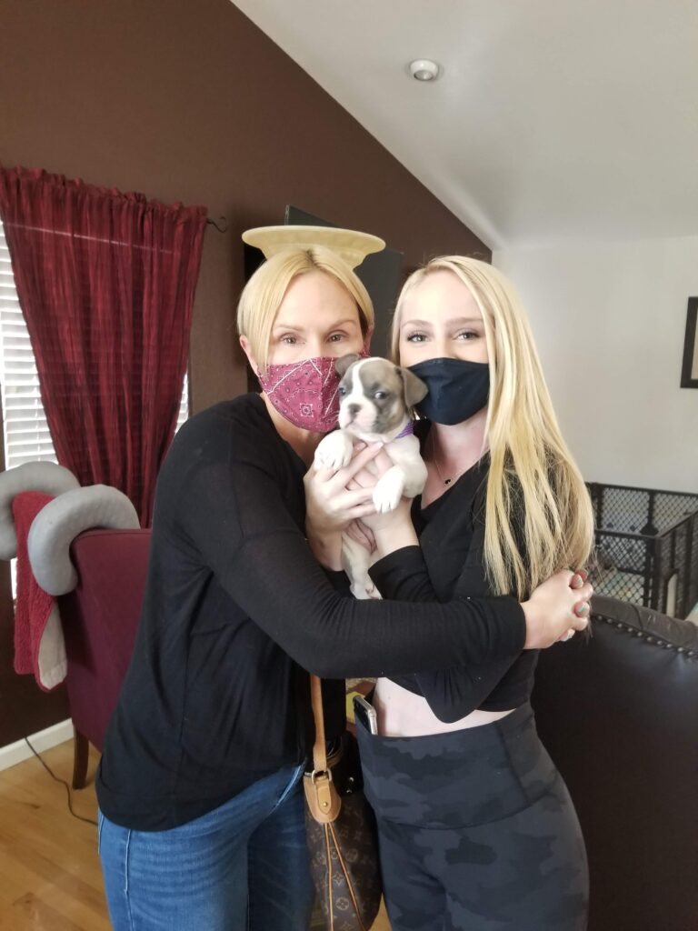 New French Bulldog Puppy Parents