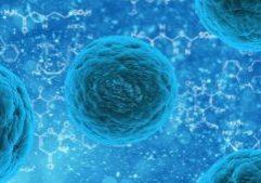 stemcell (1)