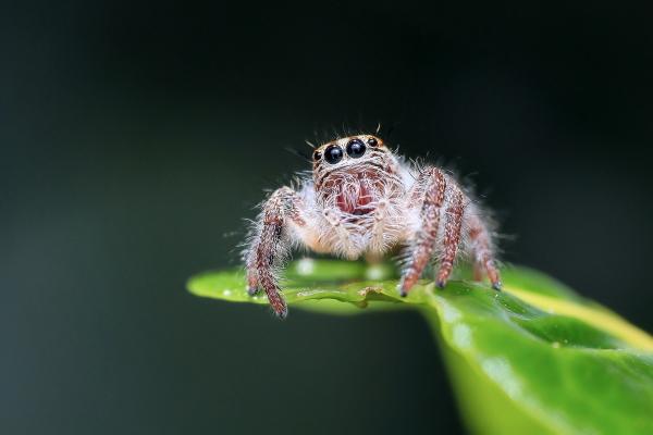 spider sitting on green leaf