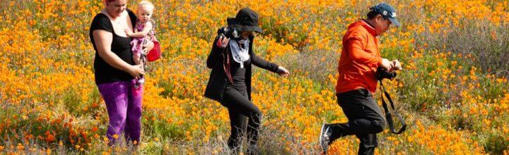 """Lake Elsinore, CA:  Wet Winter Results In Wildflower """"Superbloom"""""""