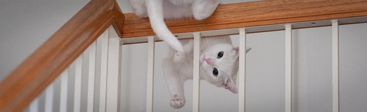 International Cat Day: A Delicate Balancing Act