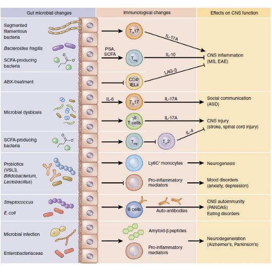 Mikrobiyata ve beyin arasında bağışıklık sistemi üzerinden bağlantı