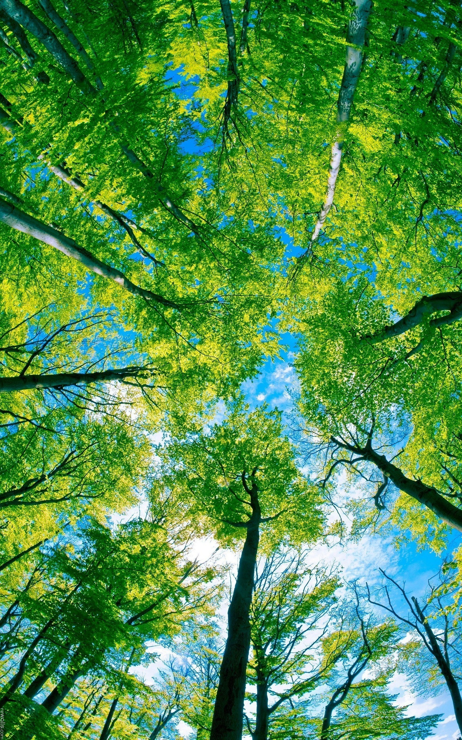 Sanctuary_forest_trees_from_below_2560x1600-port