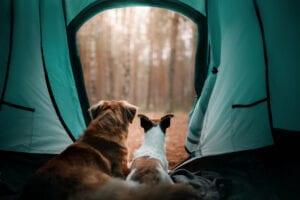 Animal Reiki and Communication