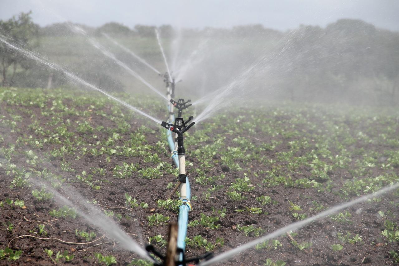 irrigation, agriculture, sprinkling