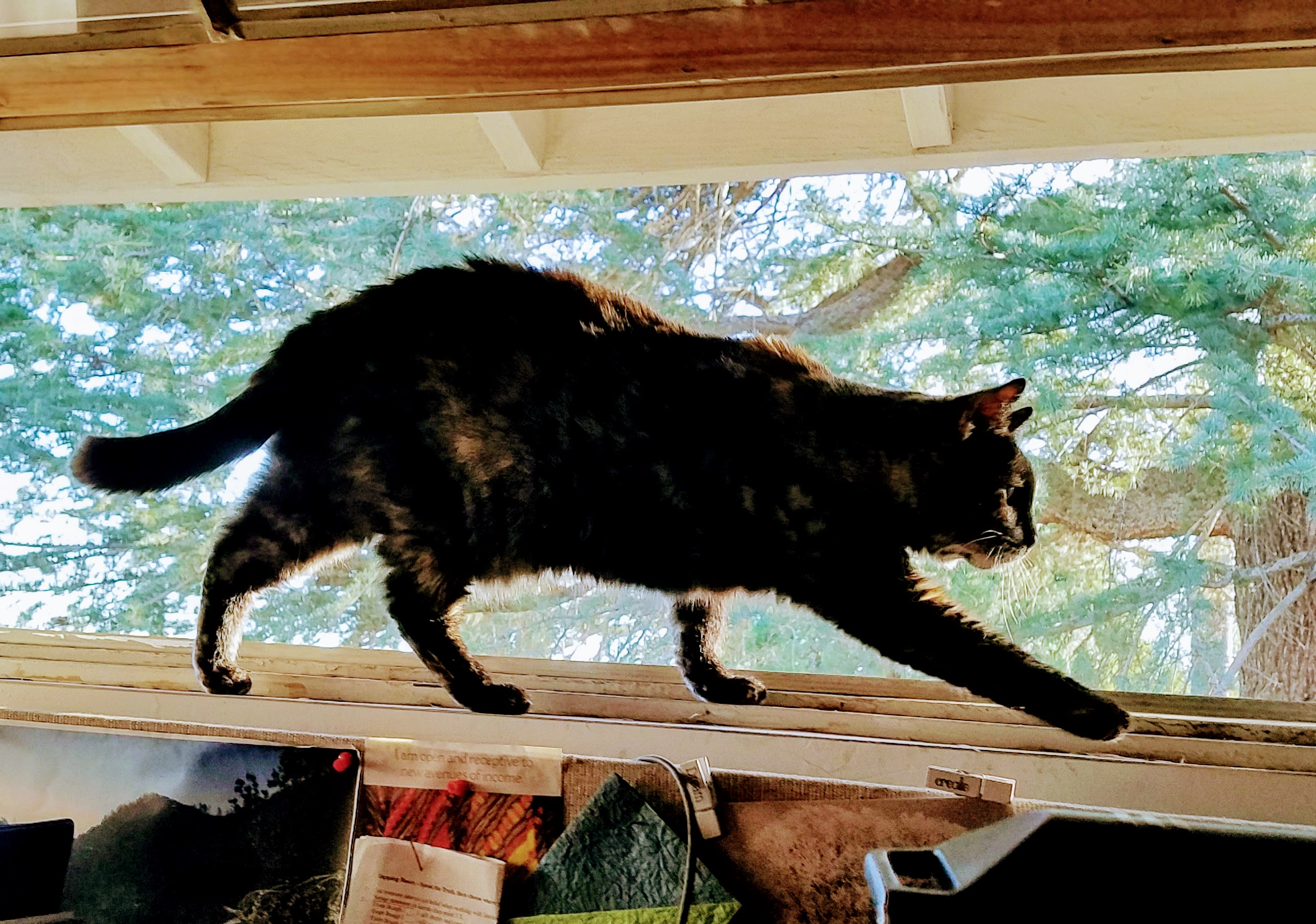 Cat stalking prey