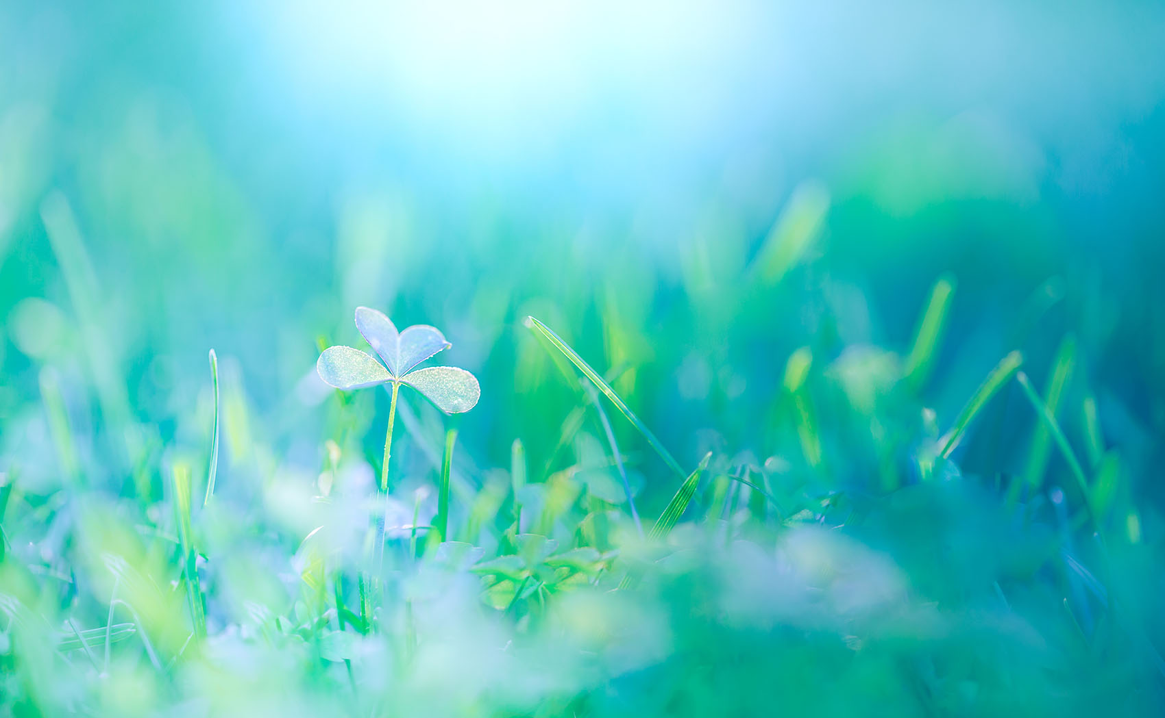 Close,Up,Nature,Background.,Relaxing,Green,Blue,Meadow.,Beautiful,Sunlight