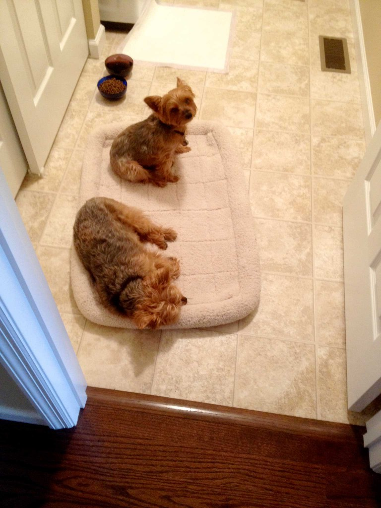 dogs in laundry room