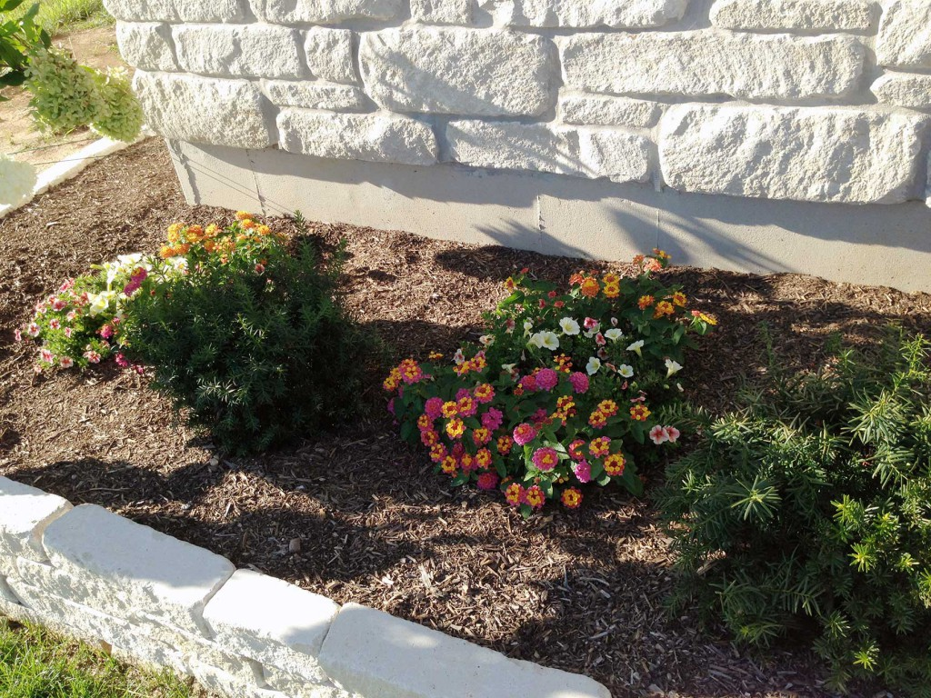 flowers planted