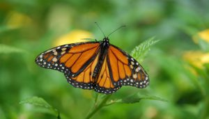 A butterfly perched on a plant.