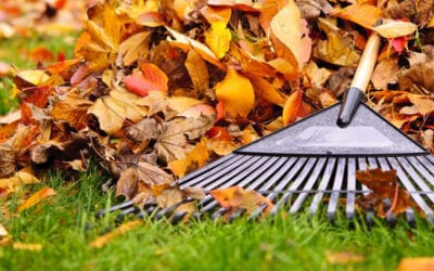 Autumn Lawn Care