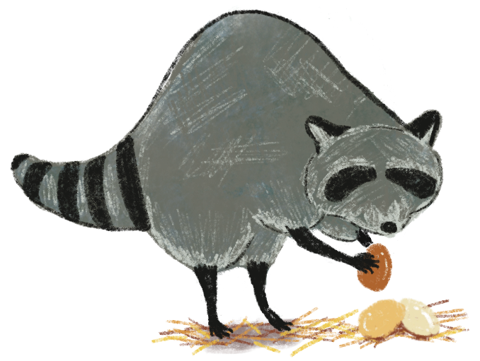 Illustration of a raccoon stealing eggs by Rosalinda Perez