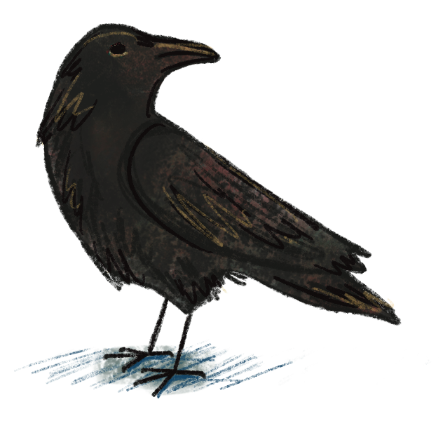 Illustration of a crow by Rosalinda Perez for the story Early Birds