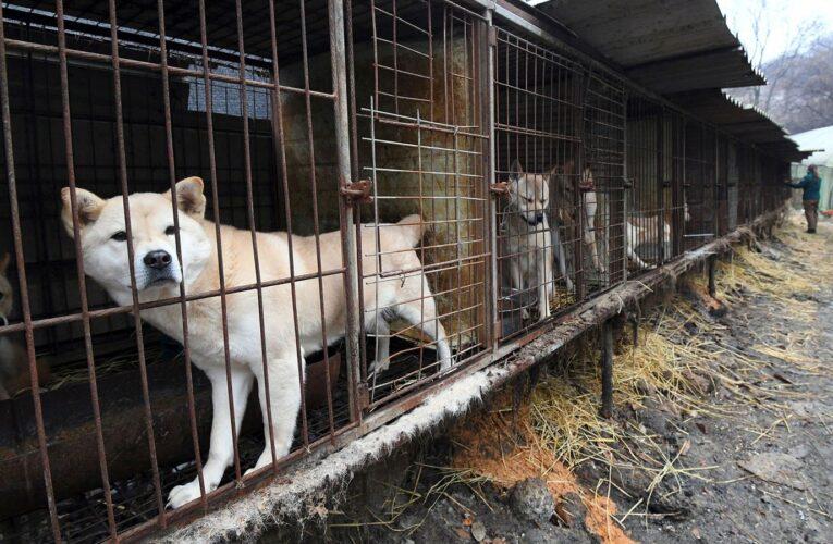 Corea del Norte prohíbe tener perros