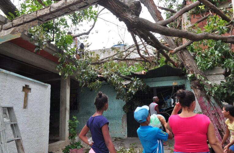 Enorme árbol cayó sobre 3 casas en La Lucha