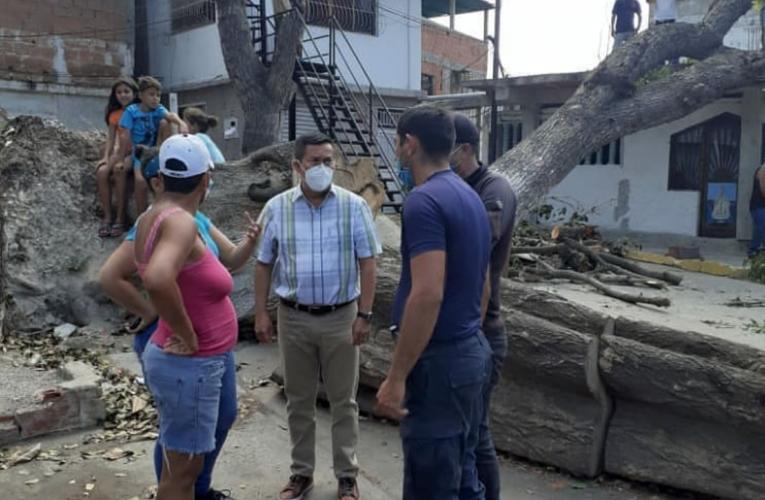 Gobernación retiró árbol que cayó sobre viviendas en La Lucha