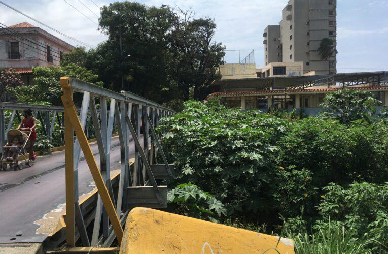 Quebrada de La Veguita convertida en una selva
