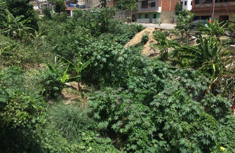 Río Piedra Azul convertido en una selva