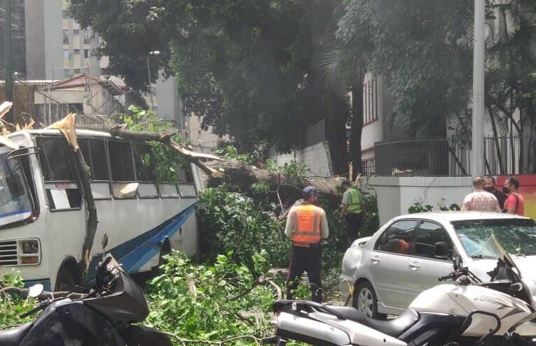Cayó un árbol sobre un bus en Bellas Artes