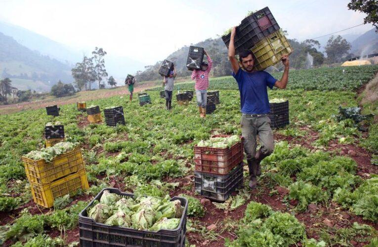 Desperdicio global: El 40% de alimentos no son consumidos