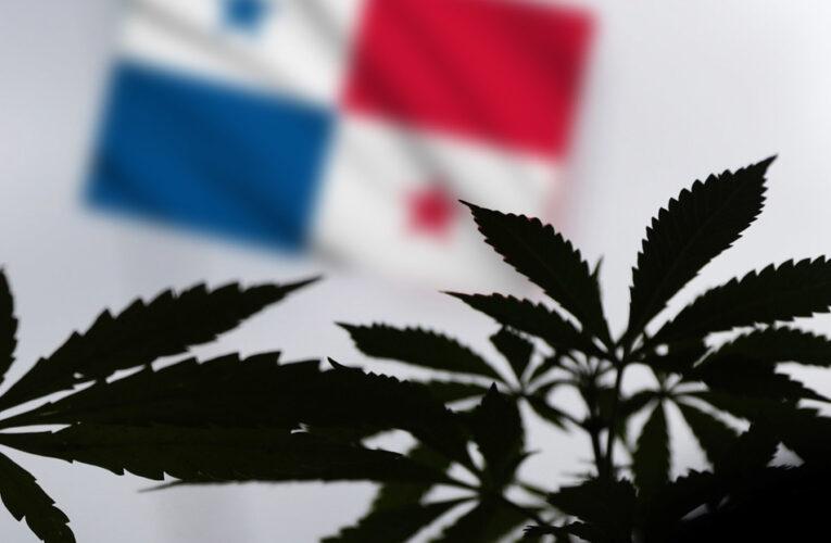 Asamblea de Panamá aprueba uso medicinal del cannabis