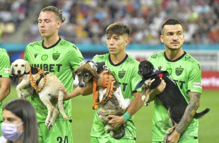Rumanía presenta perros en adopción en los partidos de fútbol