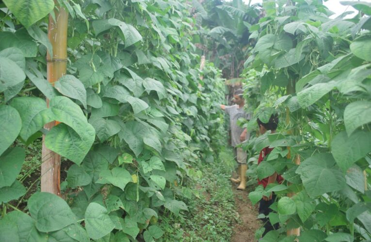 En Carayaca ha caído la producción agrícola por falta de apoyo del Estado