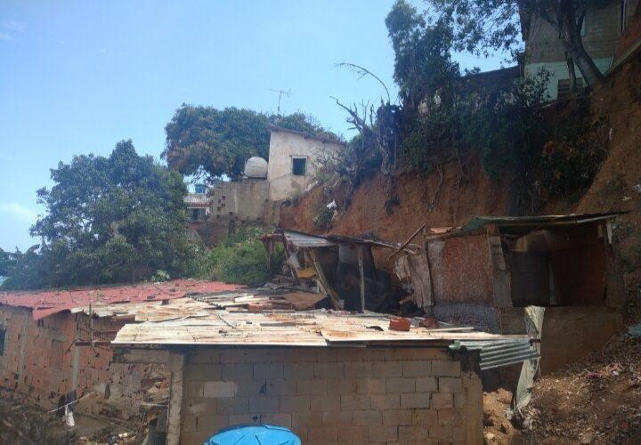 Árbol a punto de caer en dos casas de Cerro Colorado
