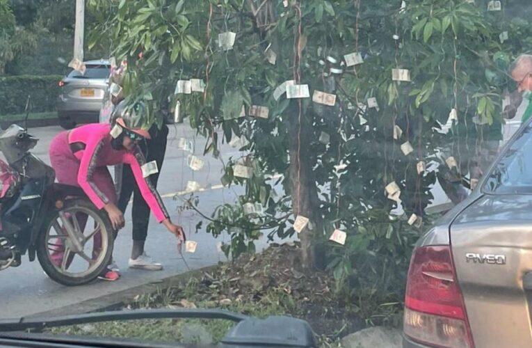 Un árbol apareció repleto de billetes en Colombia