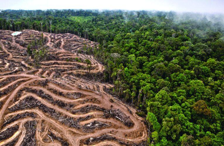 Denuncian a Bolsonaro ante la CPI por deforestación del Amazonas