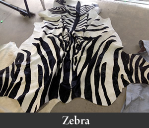 zebra300