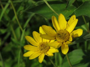IMG_2932 savannah flowers sm